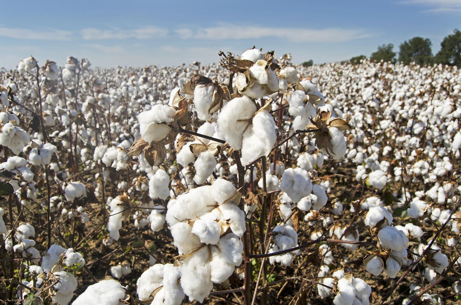 percale de coton